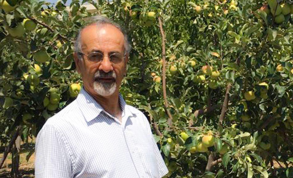 سیب دورنگ و گلابی شاه میوه دماوند