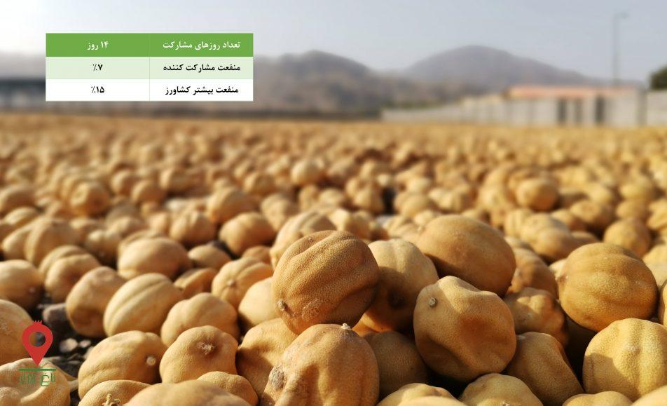 لیمو عمانی منوجان-مشارکتی