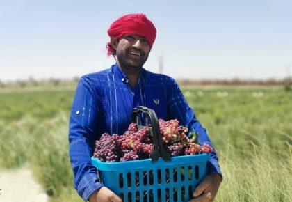 چرا سرمایه گذاری در کشاورزی؟